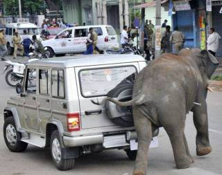 Elephant-001.jpg