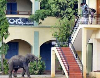 Elephant-002.jpg