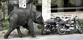 Elephant-003.jpg