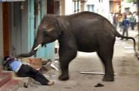 Elephant-004.jpg