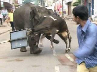 Elephant-006.jpg